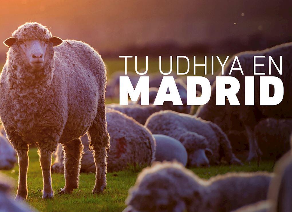 Tu Udhiya en Madrid