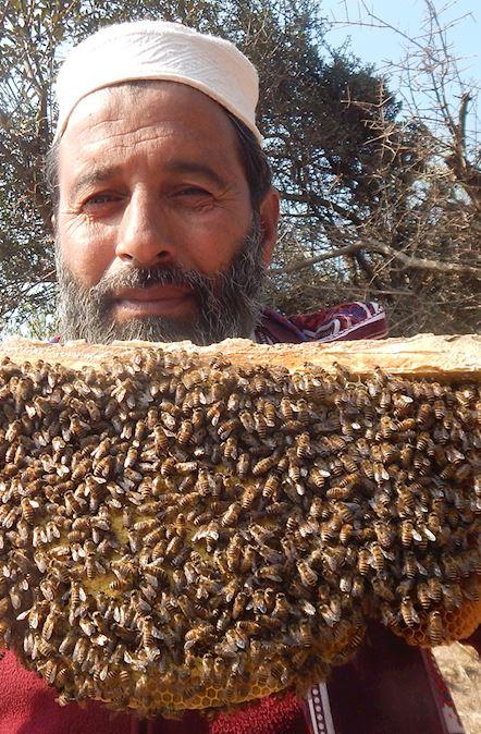 Granja de miel (colmenas) para Pakistán